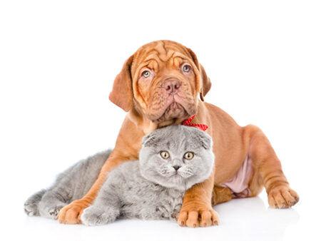 Зачем нужны домашние животные?